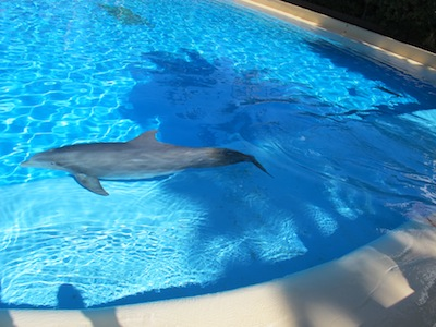 Le secret garden dolphin habitat for Piscine les dauphins