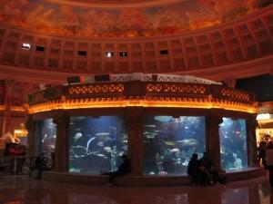 Aquarium Caesars Palace