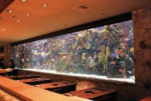 aquarium Mirage