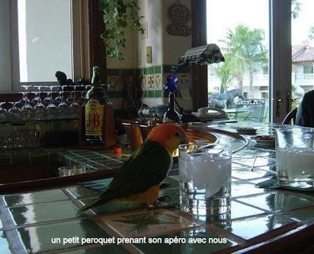 un invité a l'un des bars.