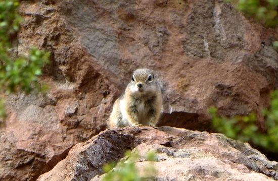 27 Squirrel HotSprings AZ PhotoBySebastienFREMONT