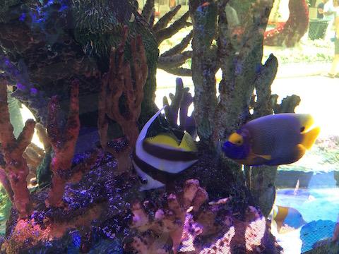 poissons-jardin-botanique-bellagio-2016