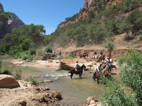 Zion PArk - Horses